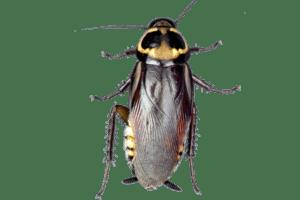 Como evitar as pragas de baratas Algarve